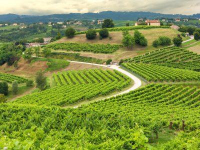 Veduta panoramica dei vigneti di Treviso