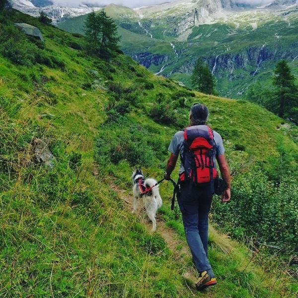 Alpe Seewji picnic a 4 zampe