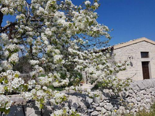 pic nic sicilia